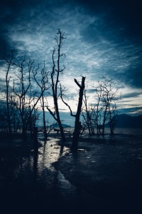 Muddy beach and dead forest at twilight