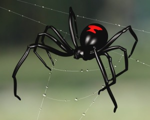 Black widow spider perched upon a dew sodden web