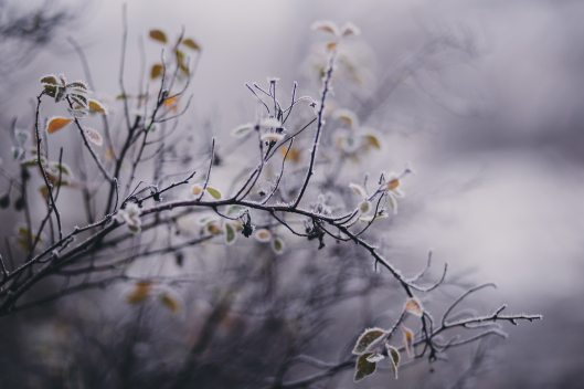 blurred-background-branches-close-up-788751
